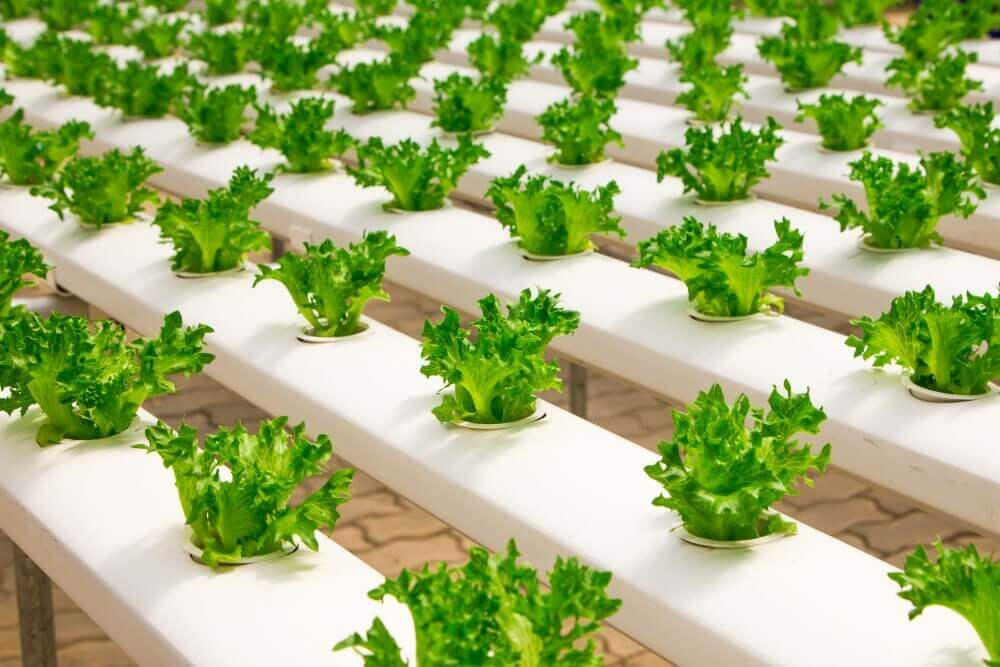 baby vegetables growing on a farm