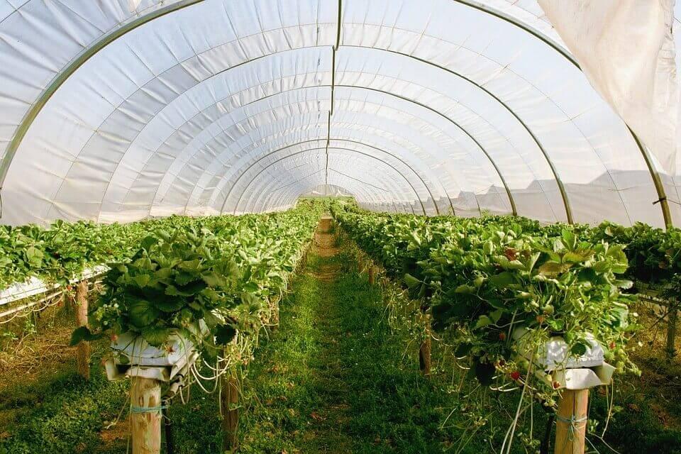 Building a Greenhouse Plans Review