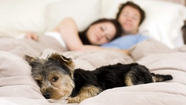 Happy couple laying in bed with their dog