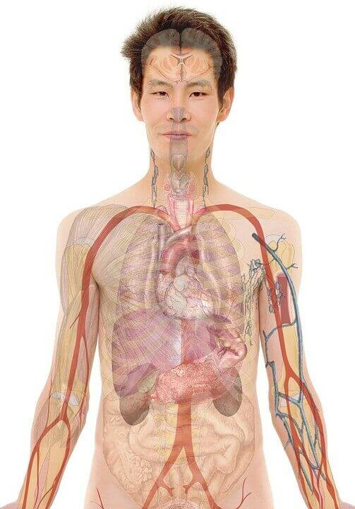 Human Anatomy And Physiology Course Review What Are You Getting