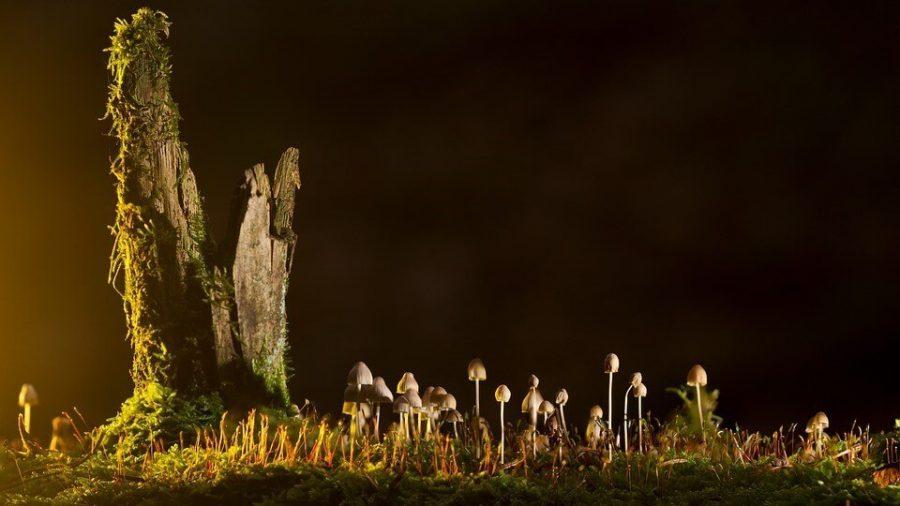 Mushrooms beside the tree