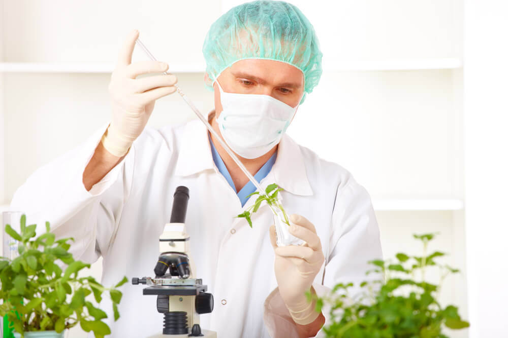 Researcher holding up a GMO plant