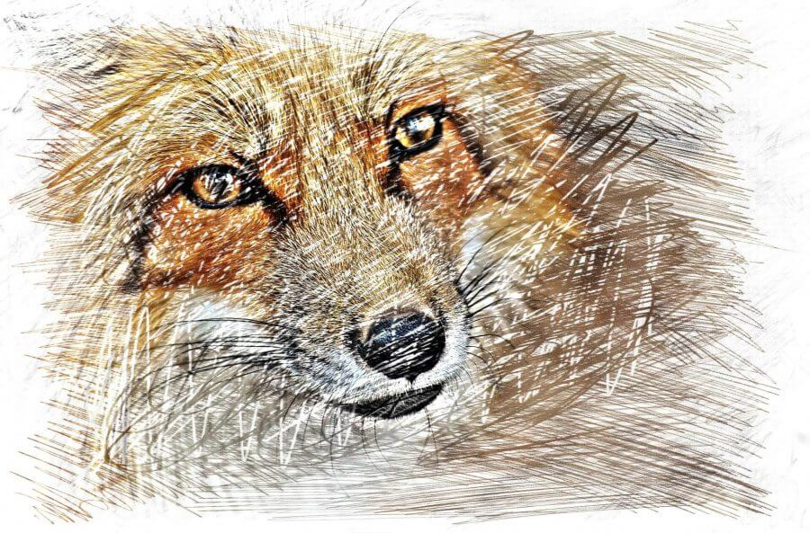 How To Draw Animal Portraits Review How Much Better Can You Get