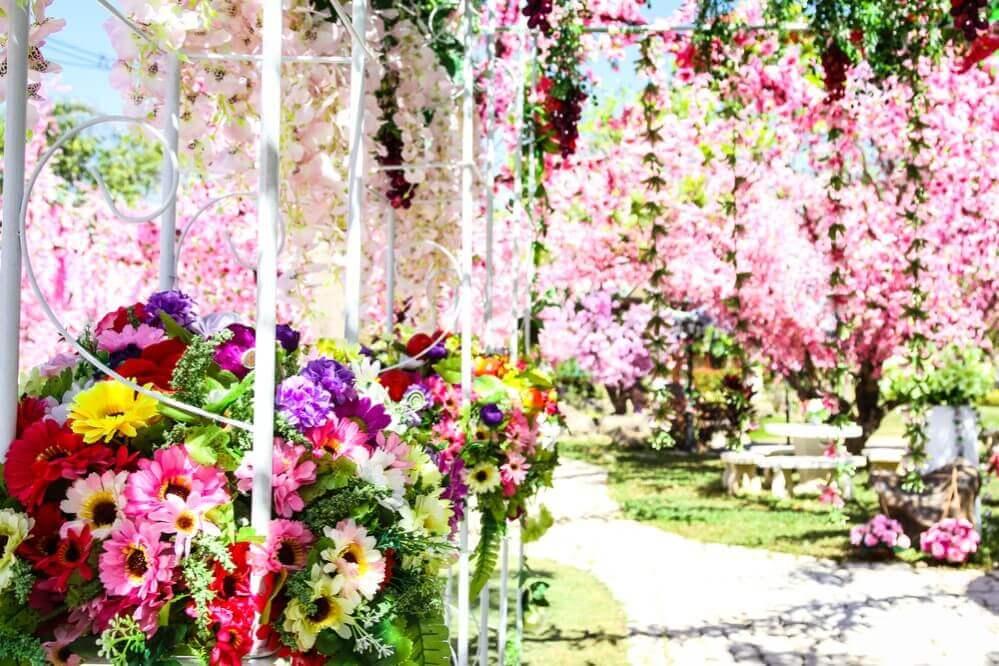 grape decorating a garden