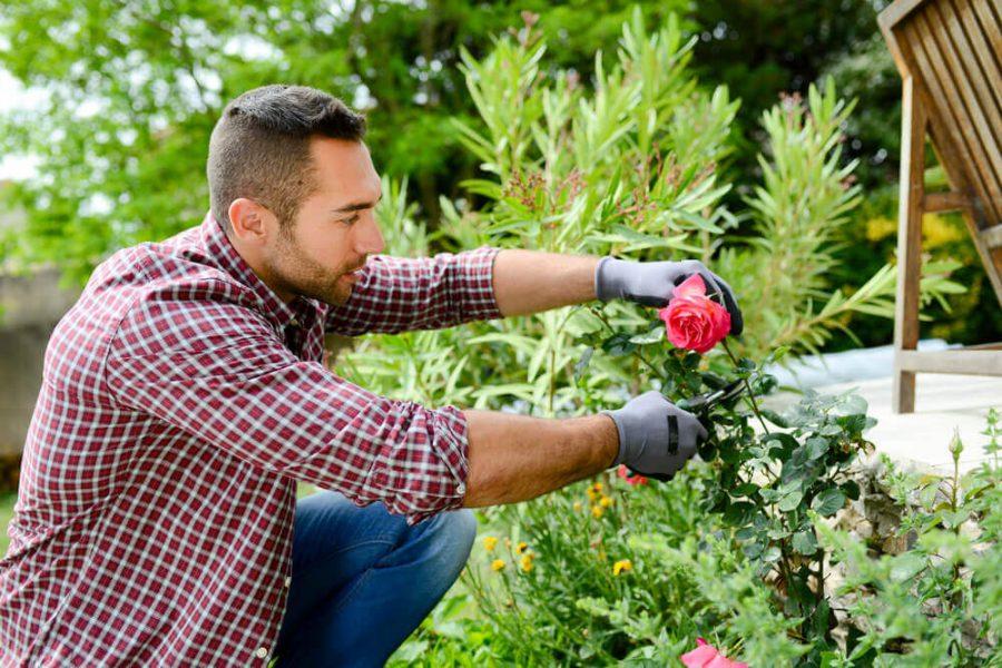 man gardener landscaping