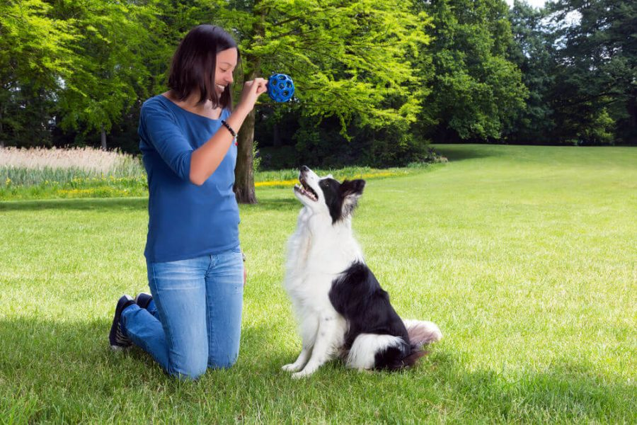 playing fetch with her border collie dog
