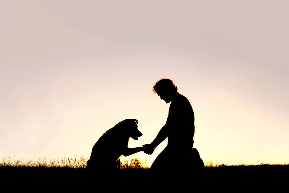 training his pet dog, and shaking hands